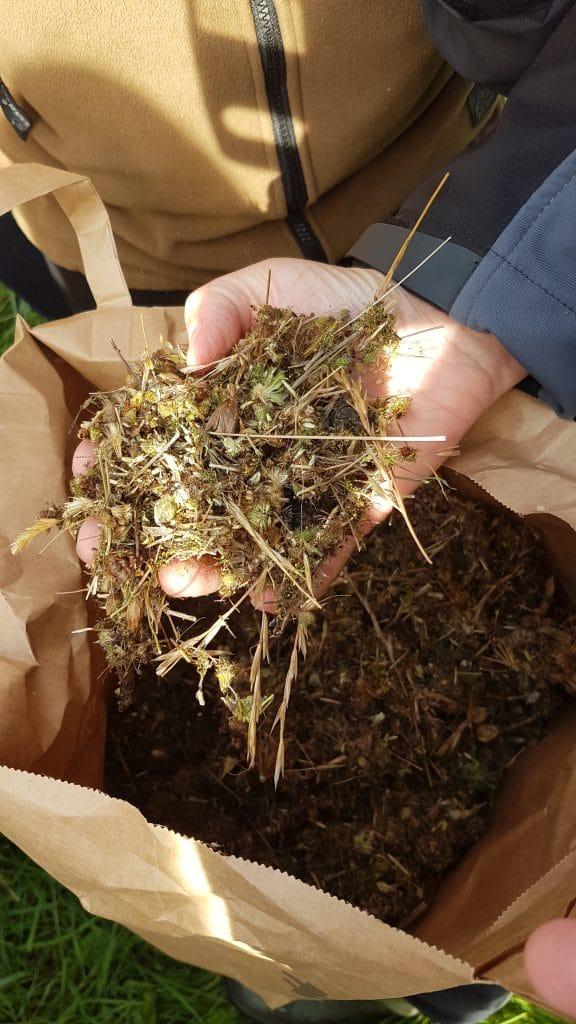 Latvianature, pļavu sugu sēklu maisījums