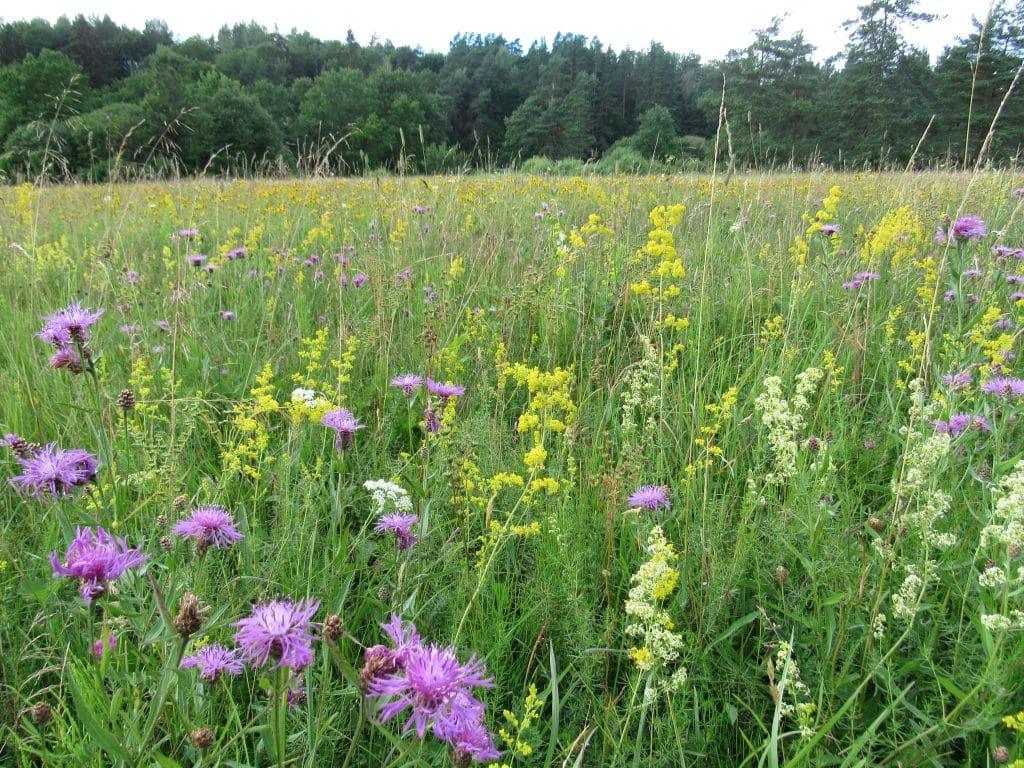 Bioloģiski vērtīga pļava, LatViaNature